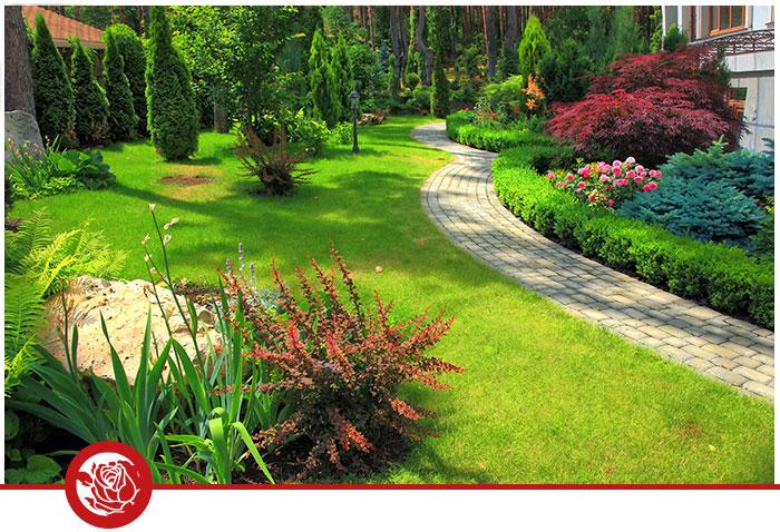 Garten Grünpflanzen